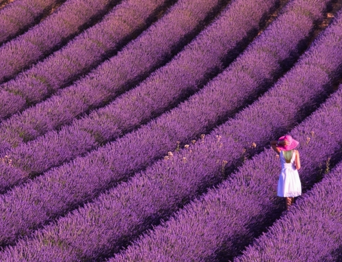 Provence – mediterrán álom
